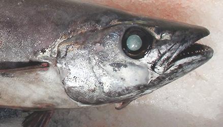 Fish 'fraud' rampant in capital: Oceana