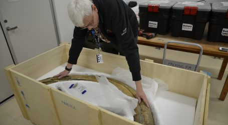 Mammoth tusks return to Canada nearly 60 years after they were illegally taken