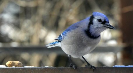 Birds are good for your mental health, study shows