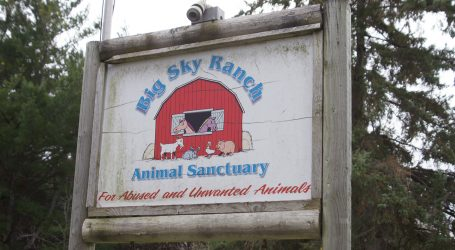 Kemptville animal sanctuary on a mission to mend human-animal relationships
