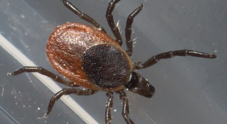 Lyme-related trial delay puts diagnosis discrepancies under the microscope