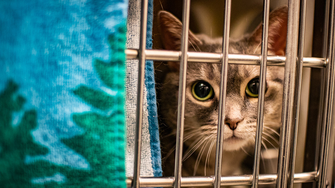 The Gift of Life: Pets and the holiday season