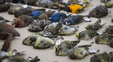 Ottawa working towards guidelines to keep birds from colliding with glass buildings