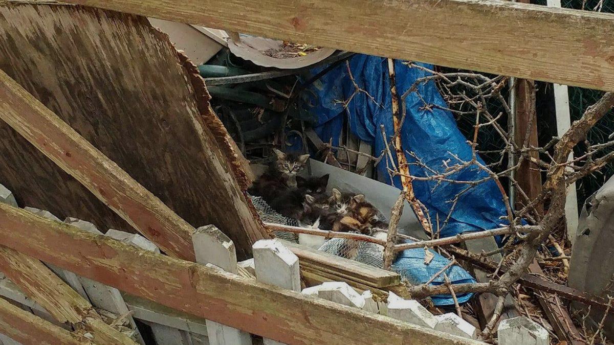 "Ottawa facing full-blown ""cat crisis,"" warn animal welfare advocates"