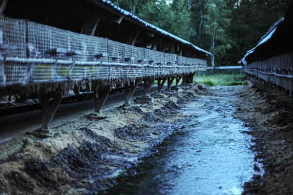 Photo showing run-down mink cages used for mink fur farming.