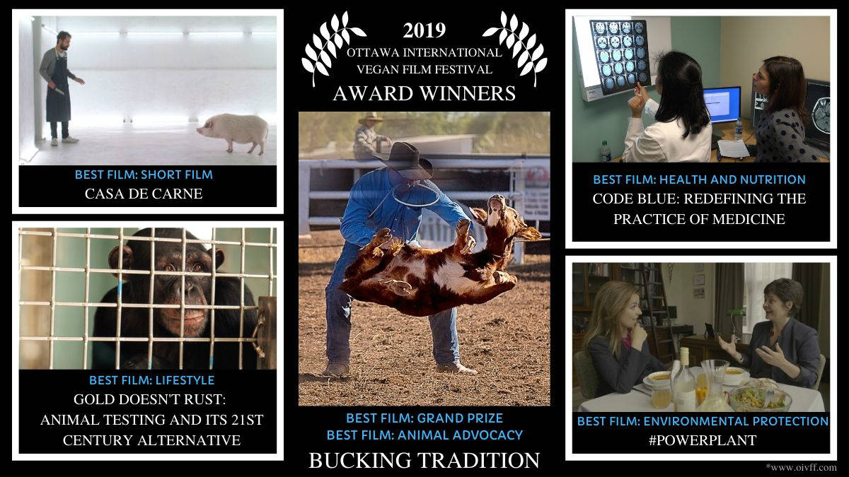 "A graphic showing the Ottawa International Vegan Film Festival Award Winners. ""Bucking Tradition"" won Best Film for Animal Advocacy and Best Overall Film. ""Casa de Carne"" won Best Short Film. ""Gold Doesn't Rust, Animal Testing and Its 21st Century Alternative"" won for Best Lifestyle film. ""Code Blue, Redefining the Practice of Medicine"" won Best Health and Nutrition film. ""#Powerplant"" won Best Environment Protection film."