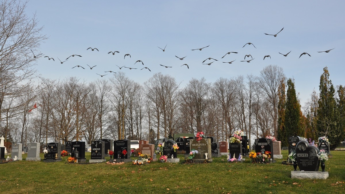 Honouring the fallen at the National Military Cemetery