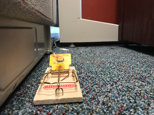 Mouse trap on the floor of the LEL building. In the background there are mouse droppings, and the visible mouse entrance from the walls.
