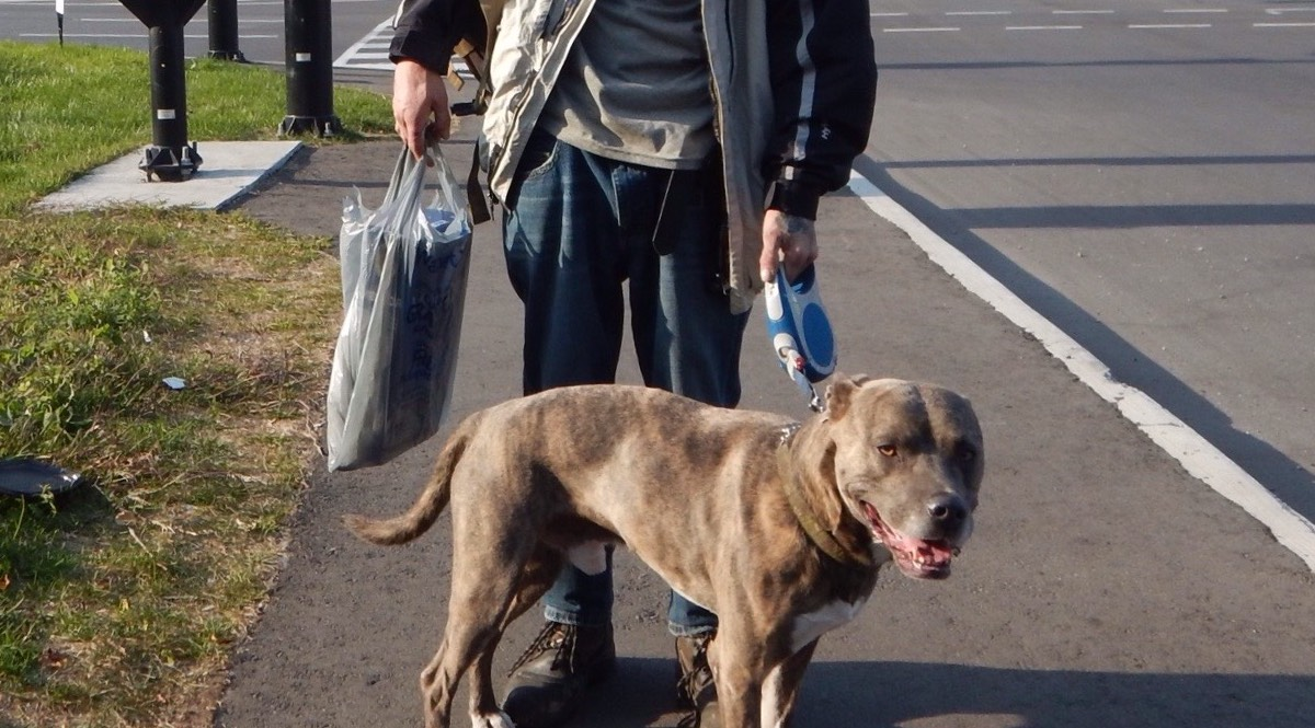 Ron, who is unhoused, and his dog Niko stand on the sidewalk at the Bronson and Catherine intersection.