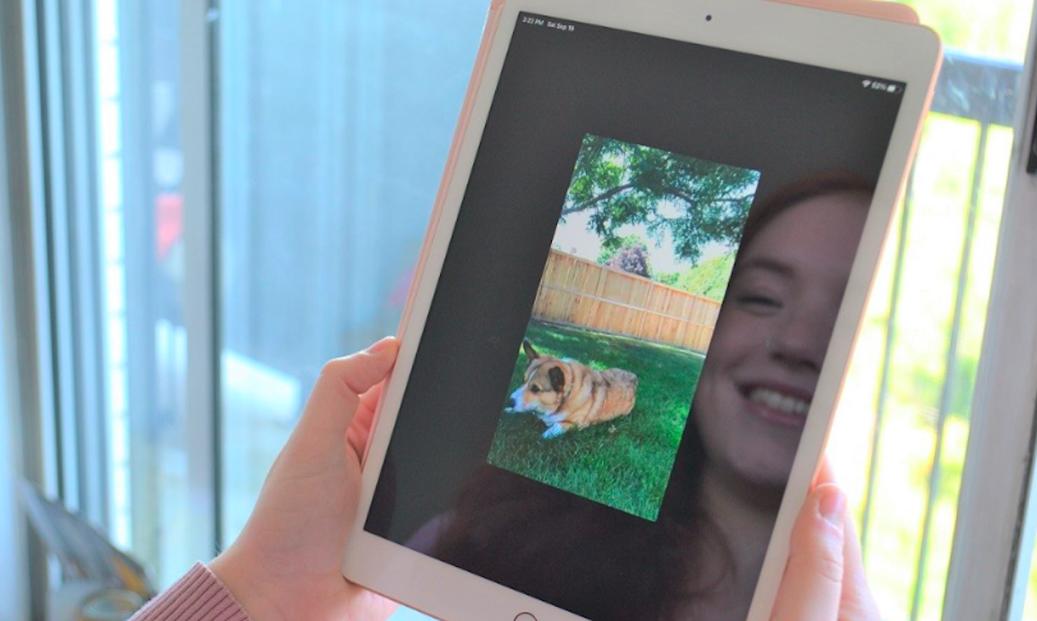 Virtual therapy dogs offer 'pawsitive' support during pandemic isolation