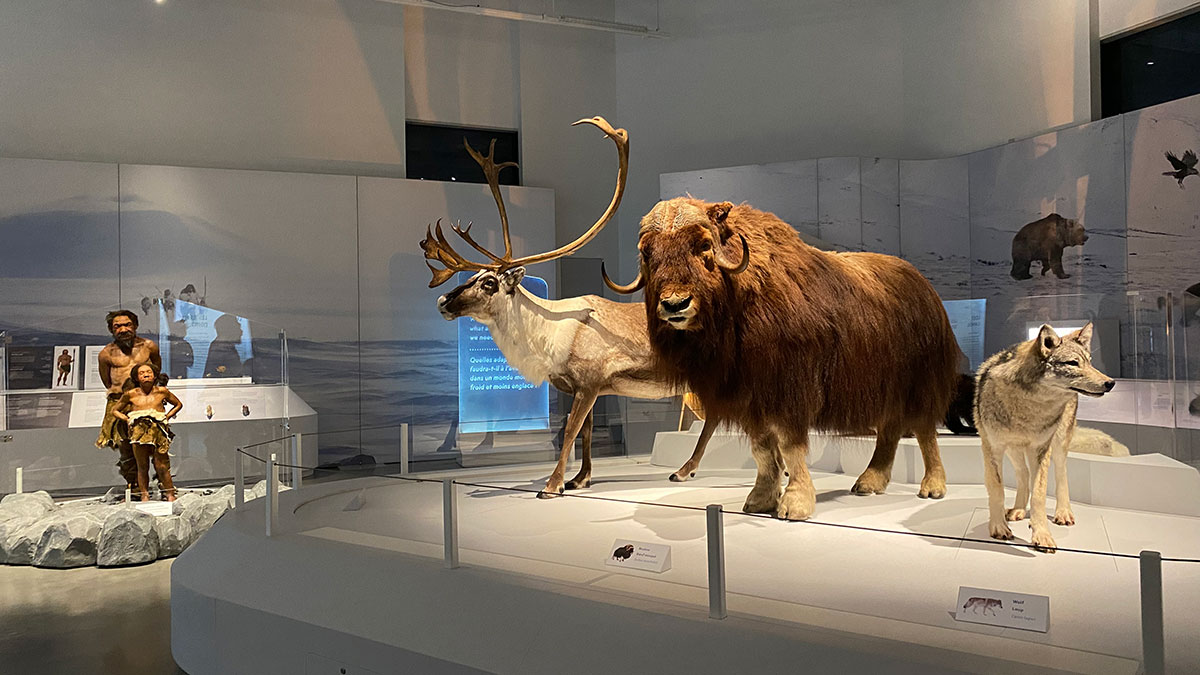 Photo from inside Planet Ice exhibit. Shows 3 taxidermy arctic animals as well as 2 neanderthal models