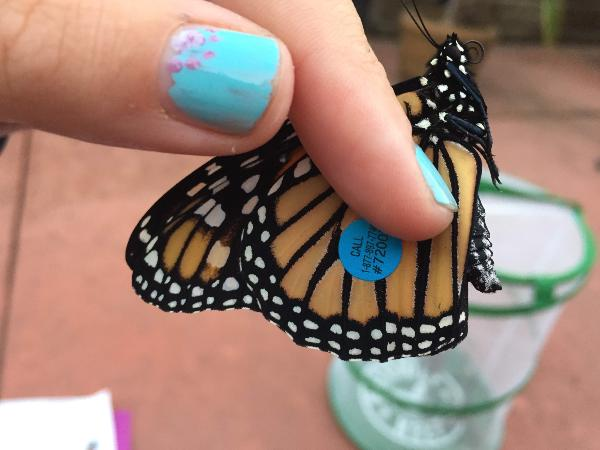 Girl holding tagged butterfly