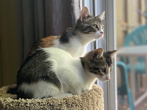 Picture of two kittens sitting beside each other.