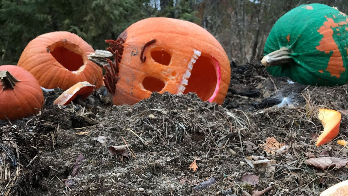 Jack-o'-lanterns in a pile of dirt for decomposition