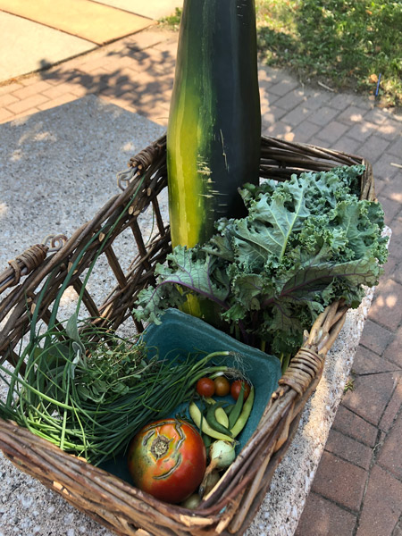 A basket of food with fresh greens and tomatoes on pavement under the shade of a tree in the summer sun.