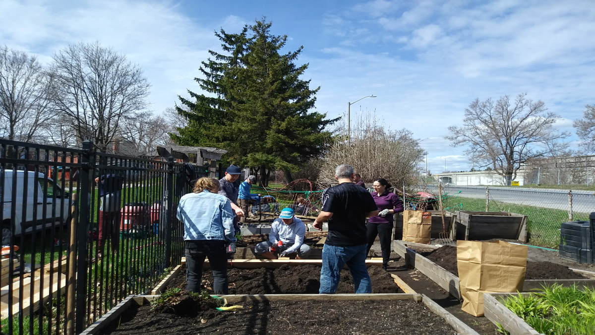 A group of people working in garden plots under blue skies.