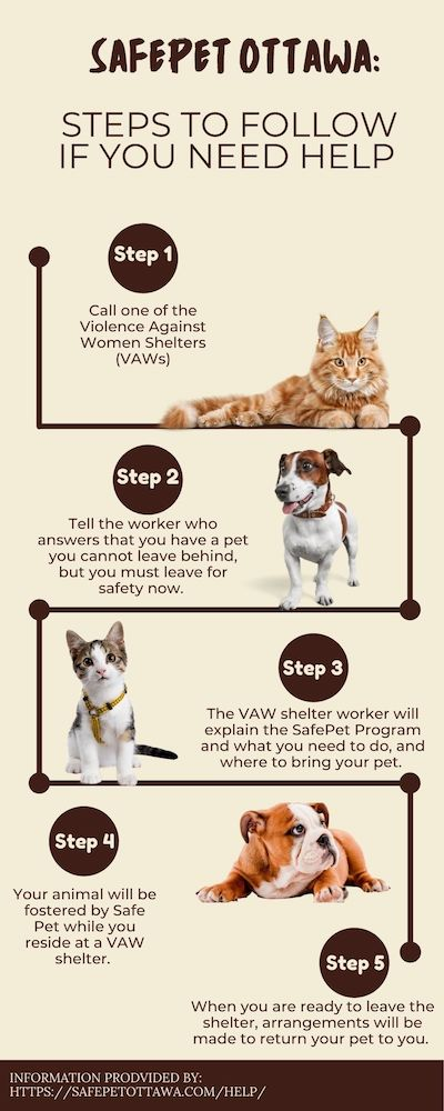 This is an infographic which explains the ways in which victims of domestic abuse can get help for themselves and their pets.