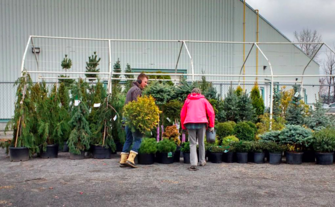 Garden centres geared up for another pandemic planting surge