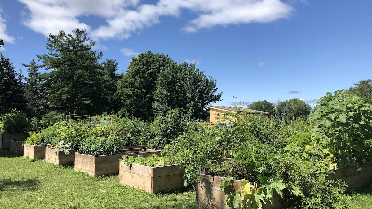 Growing concern: Second community garden opens on NCC land in bid to battle food insecurity in Hintonburg-Mechanicsville area