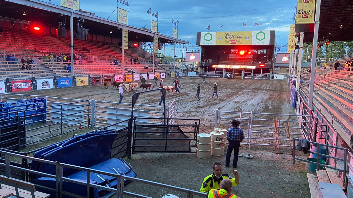 Staff herd bulls into the grandstand just hours before an evening rodeo begins.