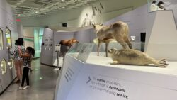 Two people visiting the arctic gallery at the Canadian Museum of History.