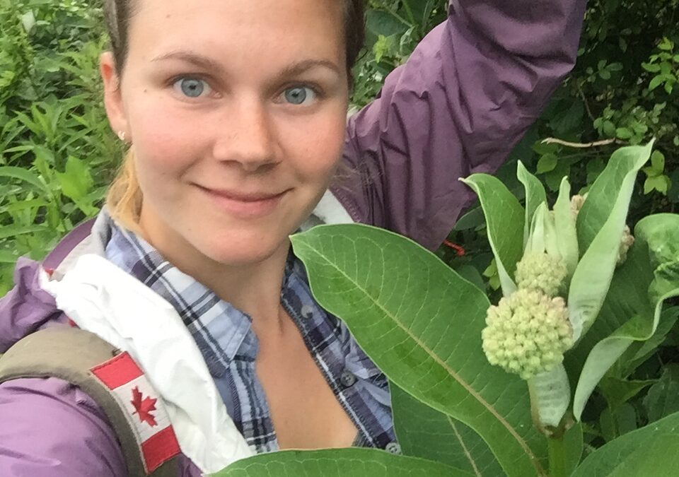 Monitoring monarchs: New technique may contribute to conserving key breeding grounds in southern Ontario